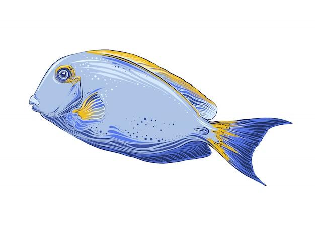 Croquis dessiné main de poisson en couleur. isolé