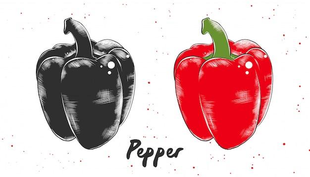 Croquis dessiné à la main de poivre bulgare rouge