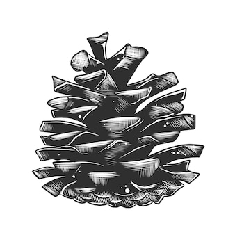 Croquis dessiné main de pomme de pin en monochrome