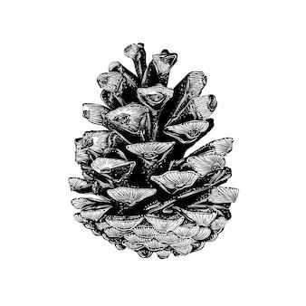 Croquis dessiné main de pomme de pin en noir isolé.