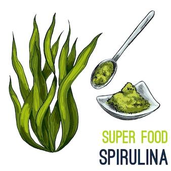 Croquis dessiné à la main de super nourriture en couleur
