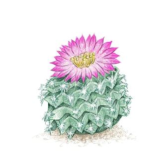 Croquis dessiné à la main de l'usine de cactus ariocarpus
