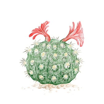 Croquis dessiné à la main de l'usine de cactus borzicactus