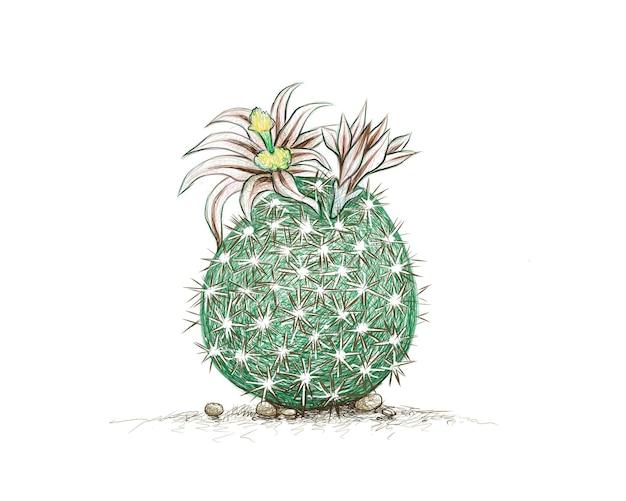 Croquis dessiné à la main de l'usine de cactus echinomastus