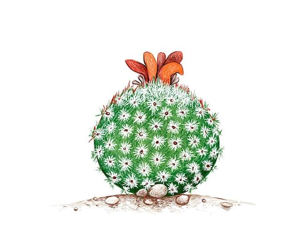Croquis dessiné à la main de l'usine de cactus epithelantha micromeris