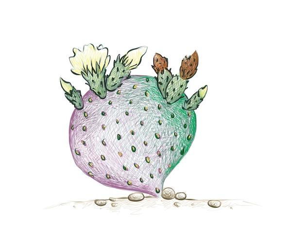 Croquis dessiné à la main de l'usine de cactus opuntia macrocentra