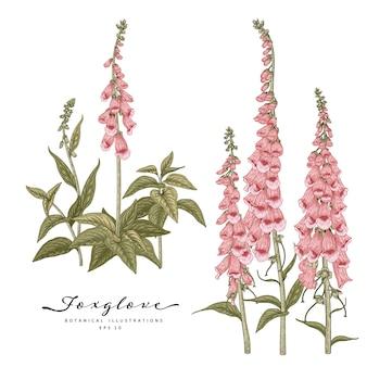 Croquis ensemble décoratif floral. dessins de fleurs de digitale. dessin au trait vintage isolé. illustrations botaniques dessinées à la main.