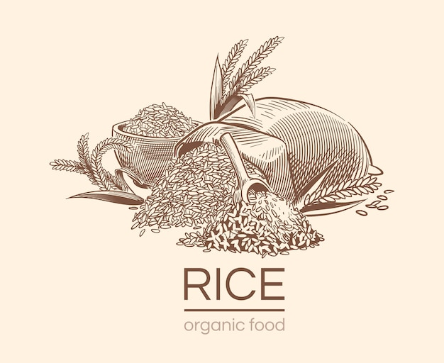 Croquis de fond de riz. plante agricole, graines de riz bio vintage dessinés à la main et sac de céréales.