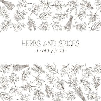 Croquis d'herbes et d'épices