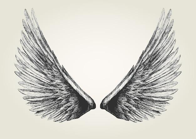 Croquis, illustration, ailes