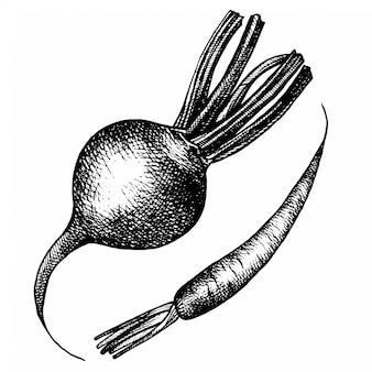 Croquis de légumes dessinés à la main.