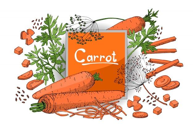 Croquis de légumes. un ensemble de carottes de différents types. racines orange, dessus de carotte verte et graines.