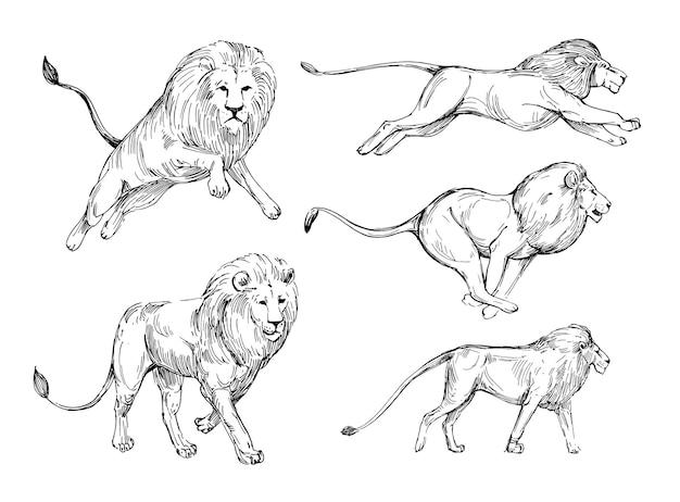 Croquis de lion. illustration dessinée à la main isolée sur blanc
