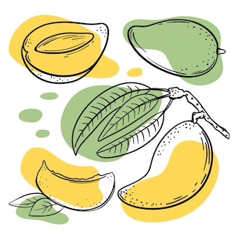 Croquis de mangue avec des éclaboussures de couleur jaune et verte sur fond blanc illustration