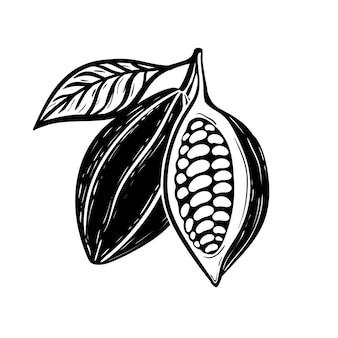 Croquis monochromes de haricots de cacao dessinés à la main
