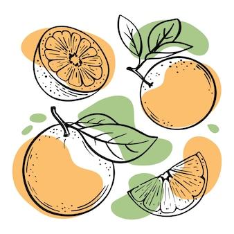 Des croquis d'oranges entières et de moitiés avec des illustrations d'éclaboussures de couleur orange pastel