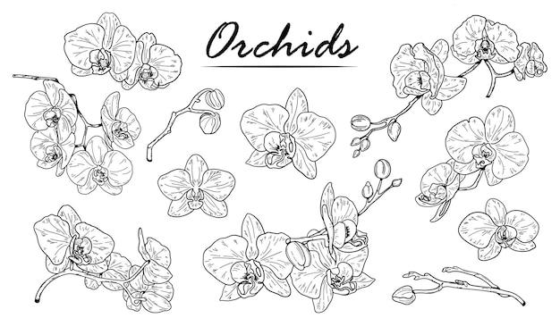Croquis d'orchidées. orchidée de contour dessiné à la main.