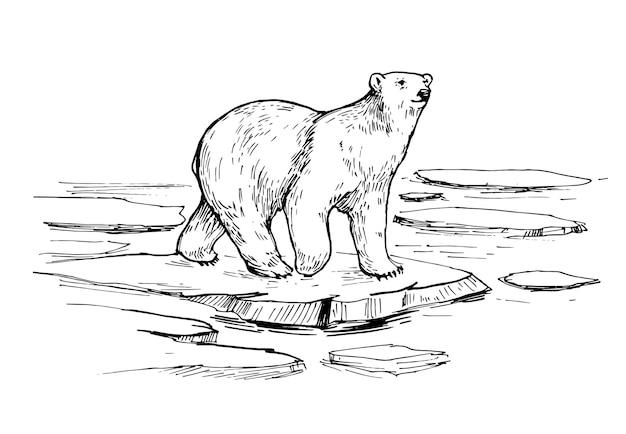 Croquis de l'ours polaire. illustration dessinée à la main isolée sur blanc
