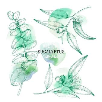Croquis de plante d'eucalyptus, fleur sur une branche avec des feuilles dans un ensemble d'eucalyptus de style gravure.