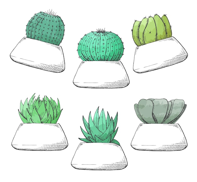 Croquis de plantes succulentes en pots. aquarelle stylisée. illustration vectorielle.