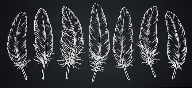 Croquis de plumes sur tableau noir.