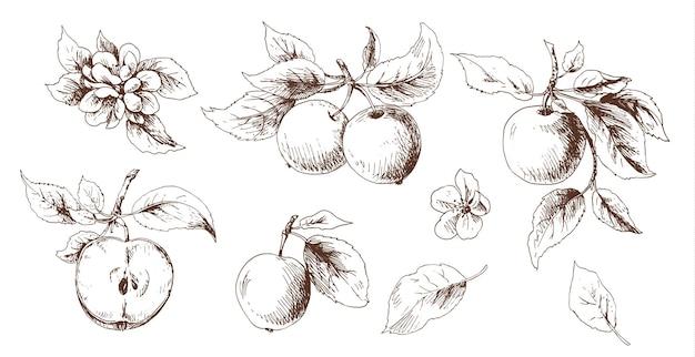 Croquis de pomme avec des feuilles