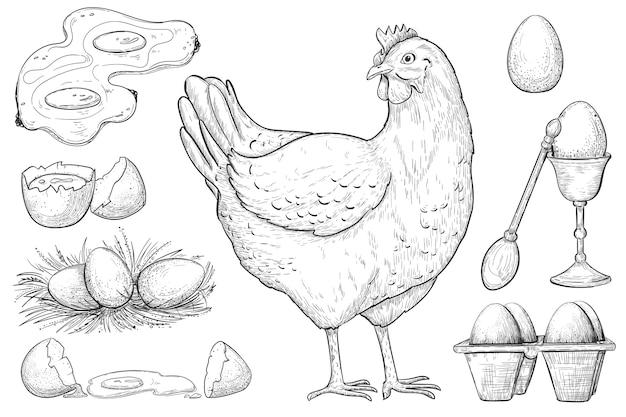 Croquis de poule et d'oeuf.