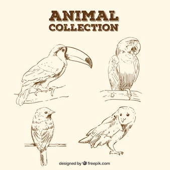 Croquis réalistes d'oiseaux