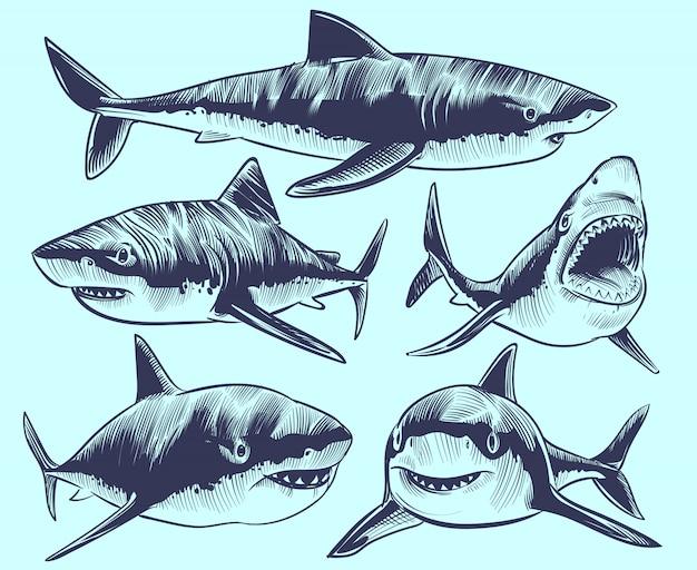 Croquis de requin. requins nageurs avec la bouche ouverte. collection de tatouage d'animaux sous-marins