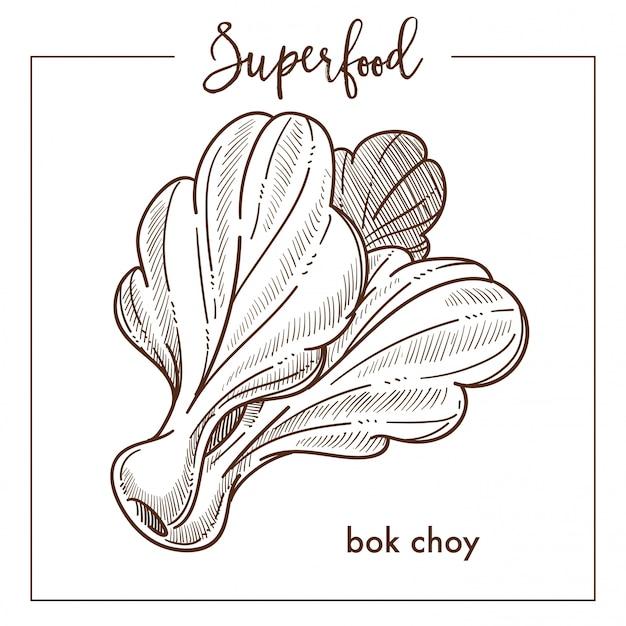 Croquis sépia superfood légume monochrome de bak chay