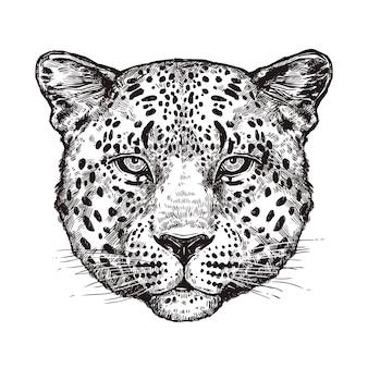 Croquis de tête de léopard isolé sur blanc
