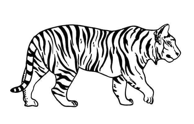 Croquis de tigre. illustration vectorielle de contour. tigre noir et blanc de vecteur.