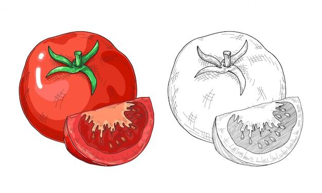 Croquis de tomate dessiné à la main