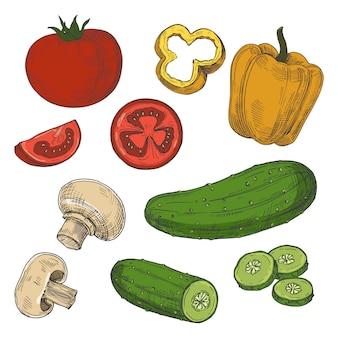 Croquis de tomates, concombres, champignons et poivrons sur fond blanc
