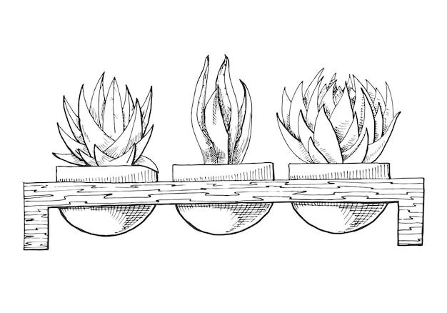 Croquis de trois plantes succulentes en pots sur un support en bois. illustration d'un style d'esquisse.