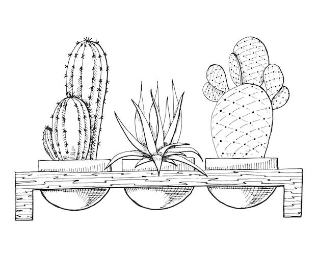 Croquis de trois plantes succulentes en pots sur un support en bois