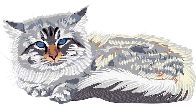 Croquis de vecteur la race de chat chat sibérien point de couleur (neva masqu