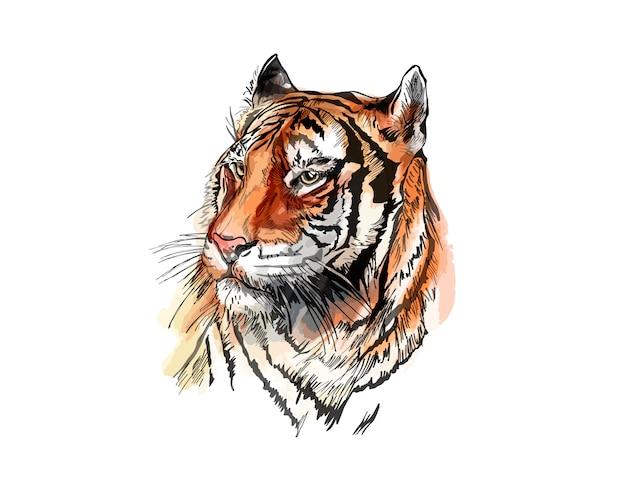 Croquis de vecteur d'un tigre.