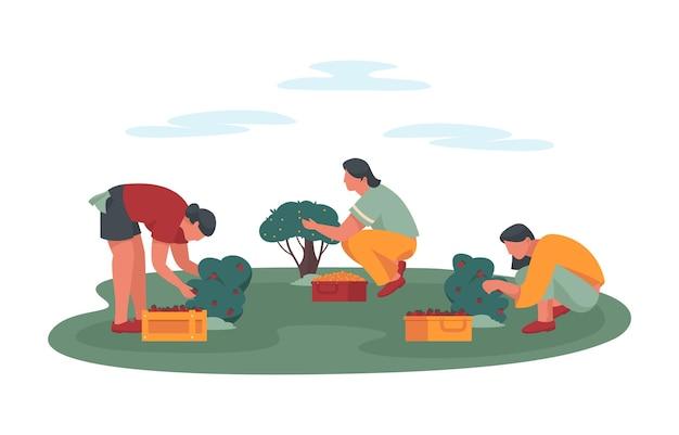Cueillette de baies d'été ou d'automne dans un jardin