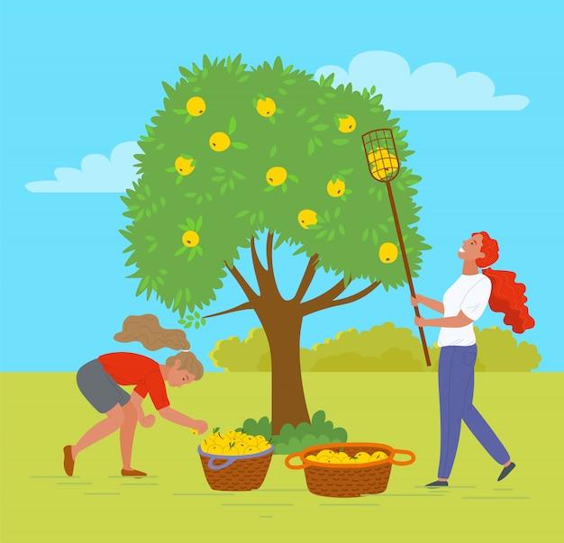 Cueillette de pommes dans les arbres et les buissons de jardin à l'extérieur