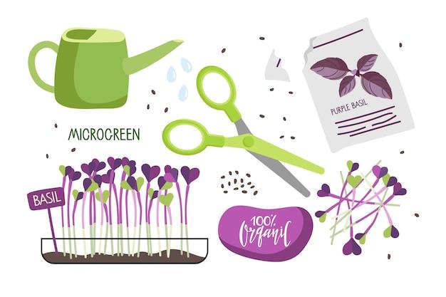 Culture de micropousses de basilic à la maison microgreen pour salade graines de basilic pousses fraîches