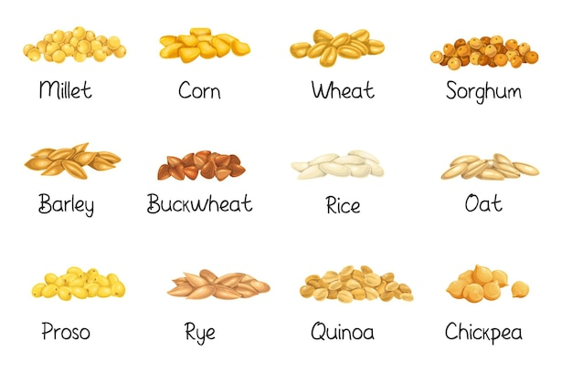 Cultures céréalières, illustration vectorielle agricole. définir les graines de grains en tas, la récolte des cultures agricoles. céréales de riz, blé, maïs, seigle, orge, millet, sarrasin, sorgho, avoine, quinoa, pois chiche et proso.