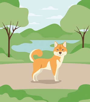 Cute animal de compagnie akita inu dans le camp