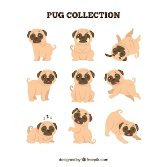 Cute pugs avec design plat