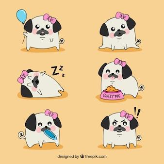 Cute pugs à la mode féminine
