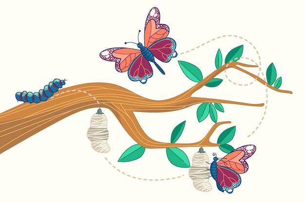 Cycle de vie du papillon dessiné à la main