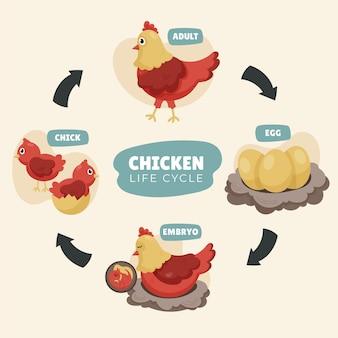 Cycle de vie du poulet dessiné à la main