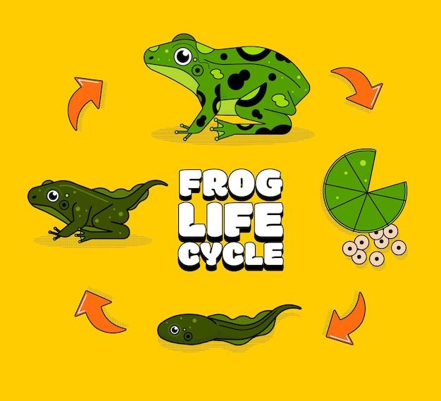 Cycle de vie de la grenouille dessinée à la main