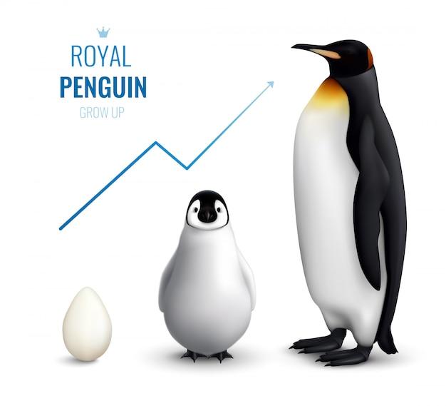 Cycle de vie des manchots royaux réaliste avec un poussin d'oeuf adulte et indiquant une croissance vers le haut
