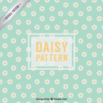 Daisy modèle